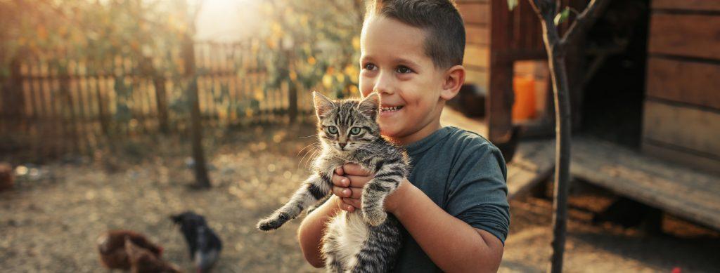 Cute 5 years old boy holding kitten.